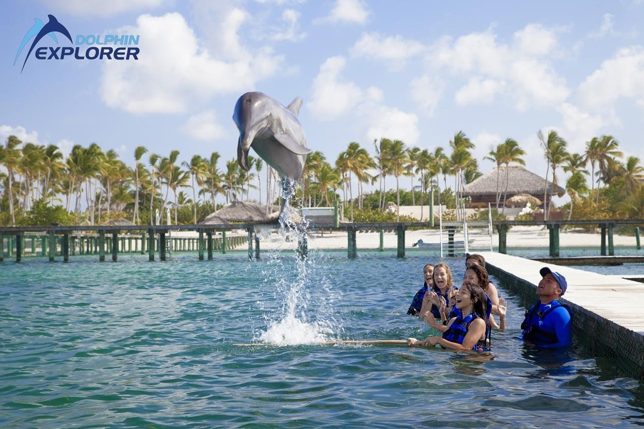 Swim with Sea Lions (Fur Seals) <i>in the Dominican Republic</i> - Everything Punta Cana