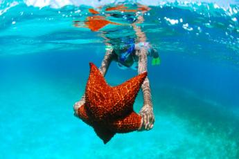 Saona Island Excursion – Caribbean Paradise