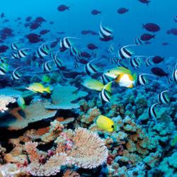 Reef snorkeling