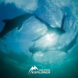 Swimming with Two Dolphins