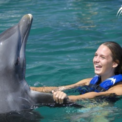 Interaction with the Dolphin