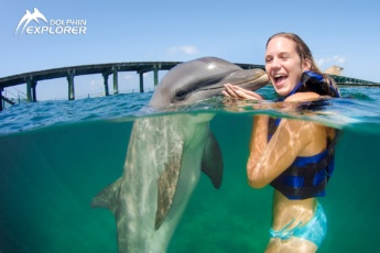 Swim with Dolphins in the Dominican Republic