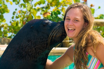 Swim with Sea Lions (Fur Seals) <i>in the Dominican Republic</i>