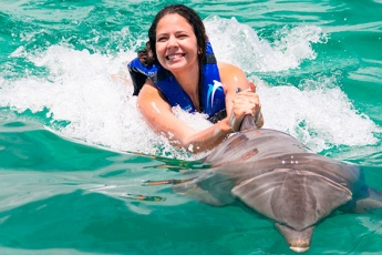 Extreme Swimming with Dolphins in Punta Cana! <i>+ Sea Lions, Fur Seals, Sharks and Rays</i>