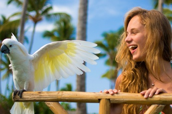 Tropical Birds and Sea Lions Show in the Dominican Republic