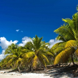 La Romana VS Punta Cana