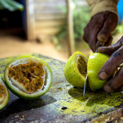 Best exotic fruits of the Dominican Republic to try in 2021