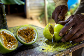 Best exotic fruits of the Dominican Republic to try in 2020