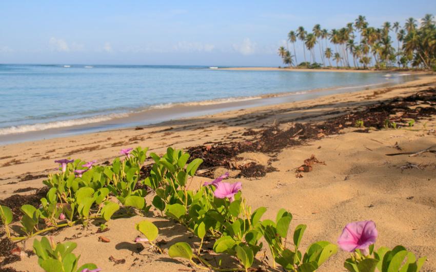 Seaweed on the Caribbean coast